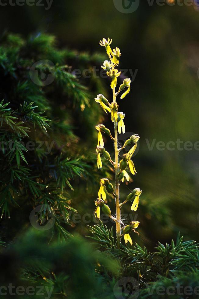 lichtgevende bloem foto