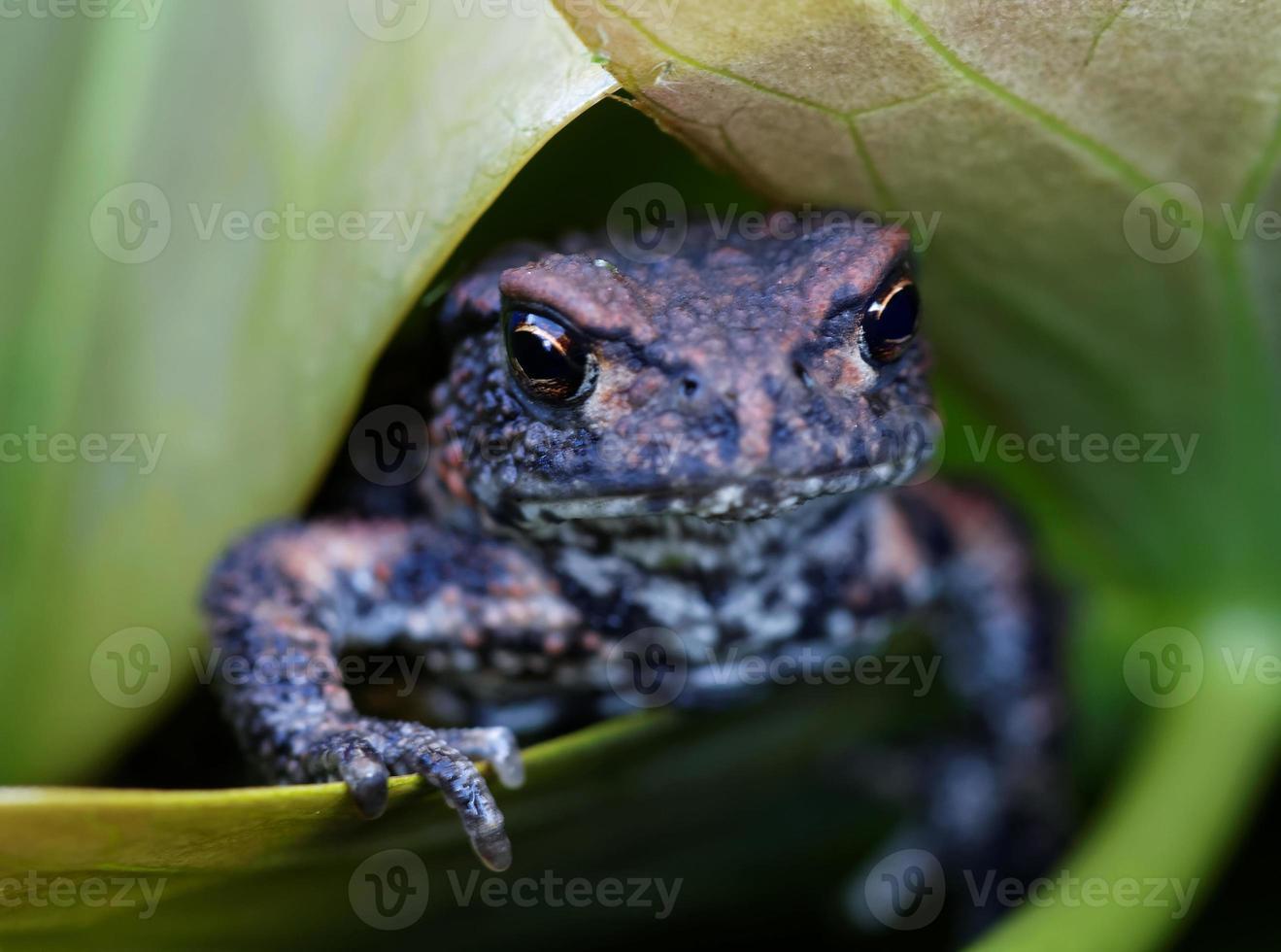 baby kikker op een groen blad met vingers foto