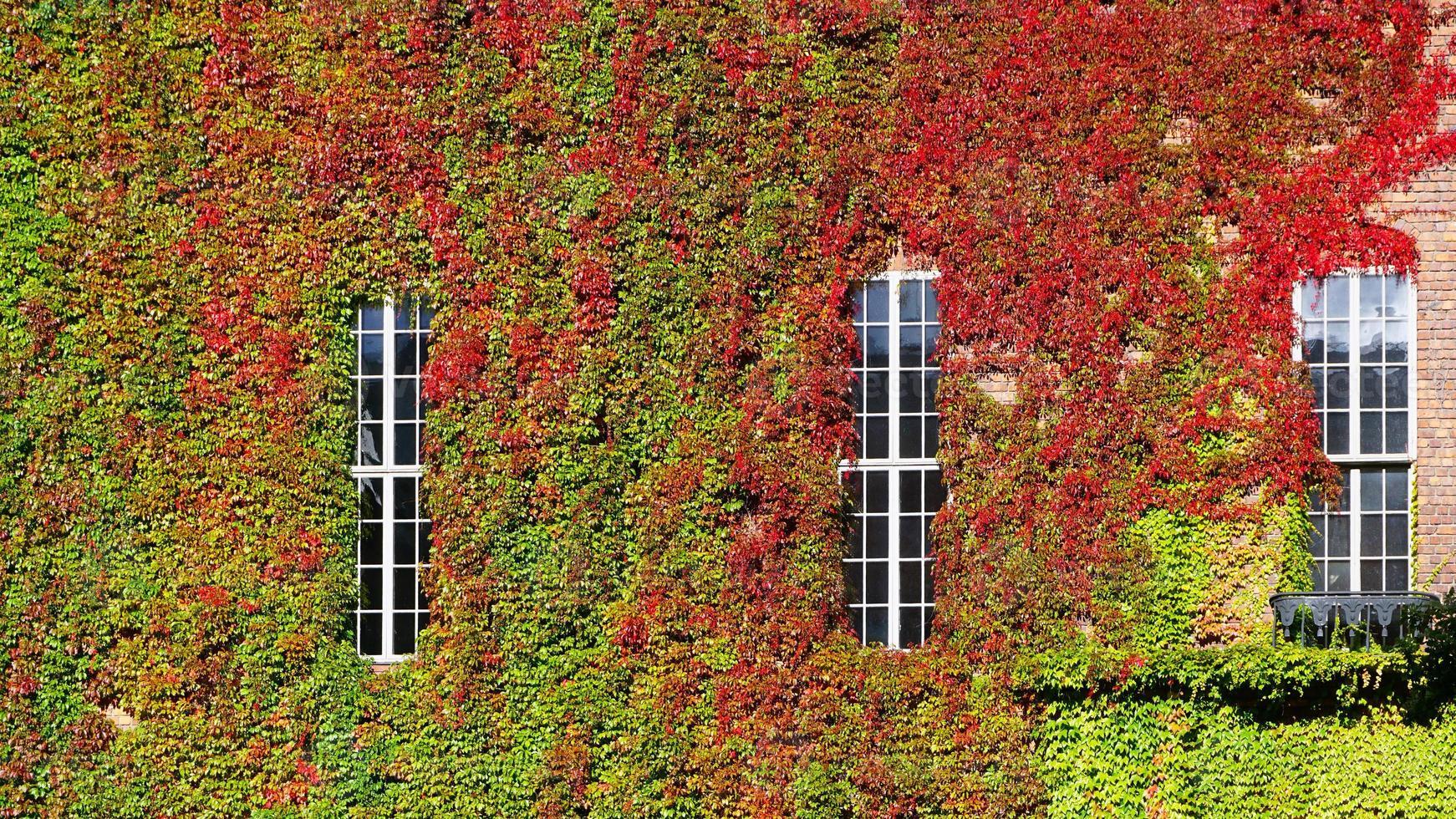 groene muur horizontaal op stadhuis foto
