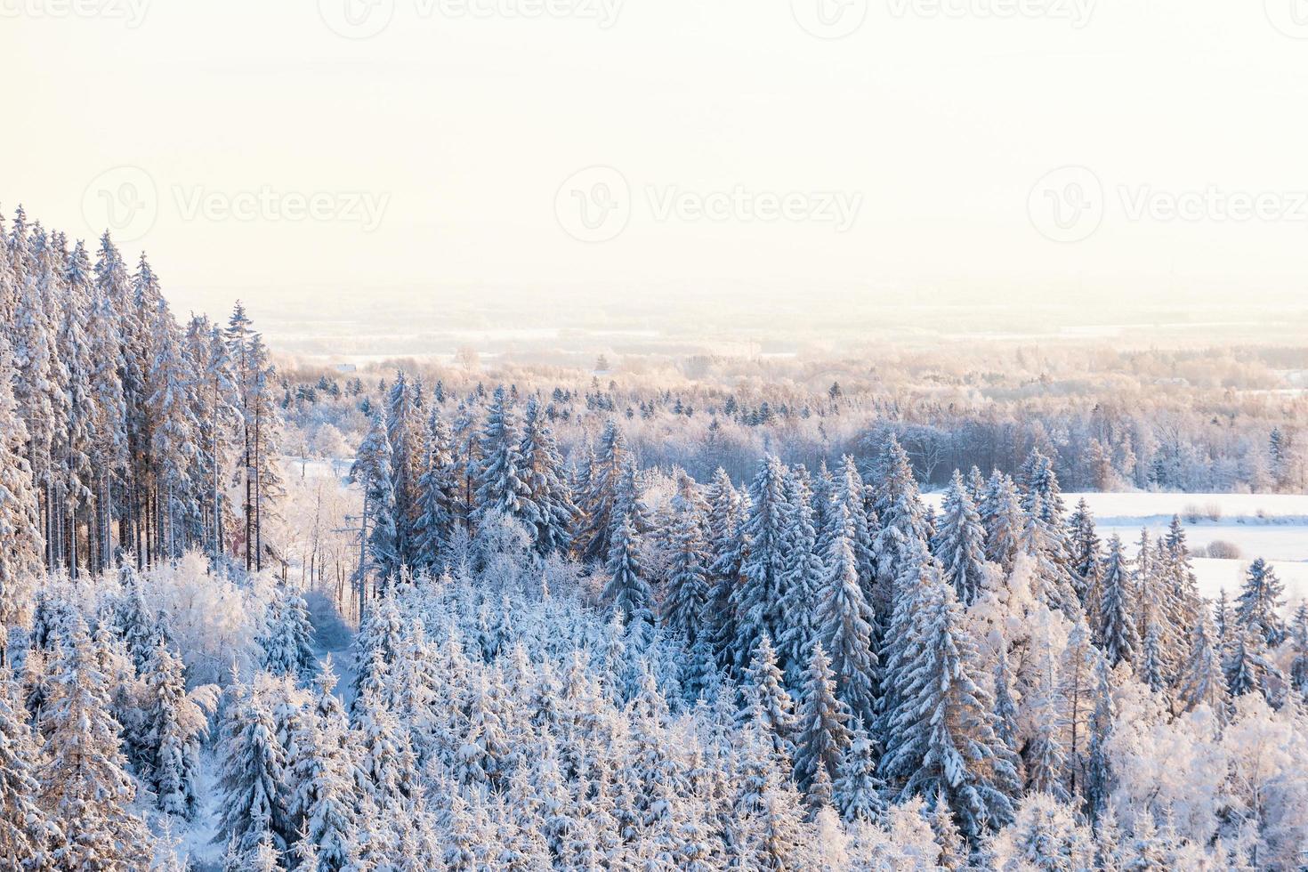 uitzicht op het bos in de winter foto