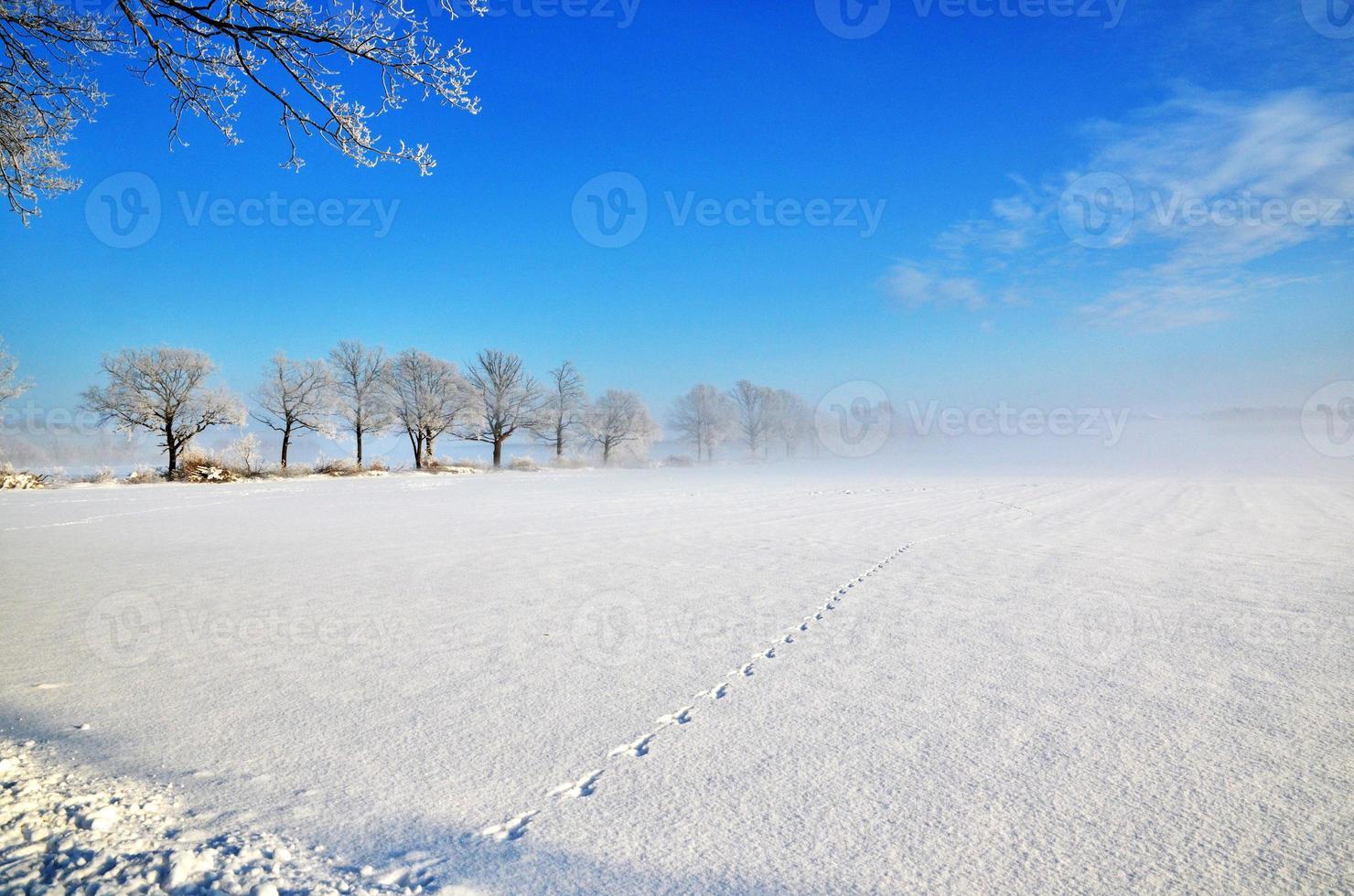 sporen in de mist foto