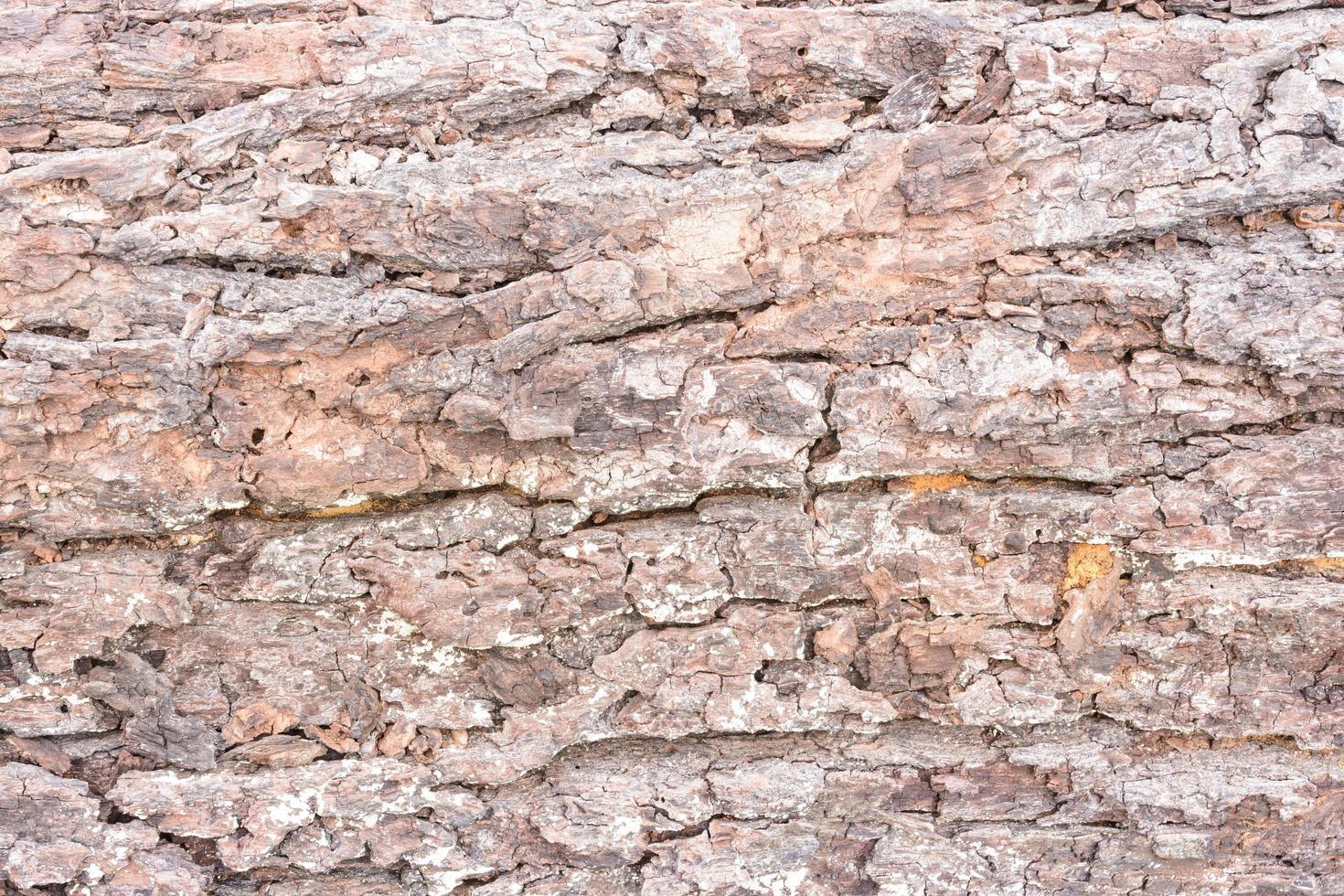 textuur hout foto