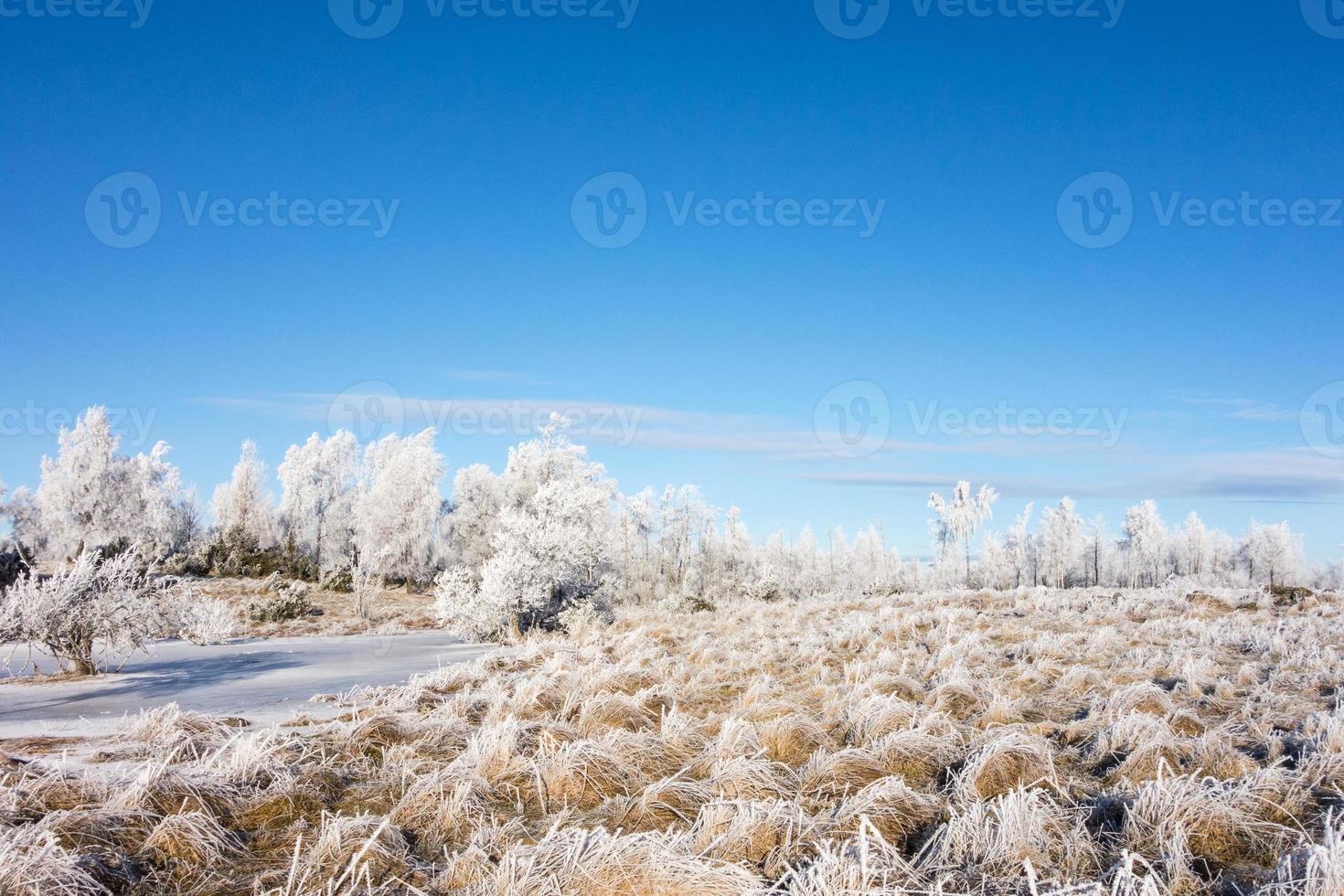 bevroren heide foto
