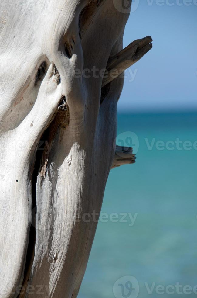 helder witte droge houten stam op strand 69 foto