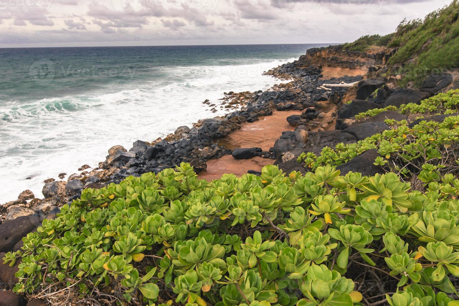 groene planten op hawaii, usa. foto