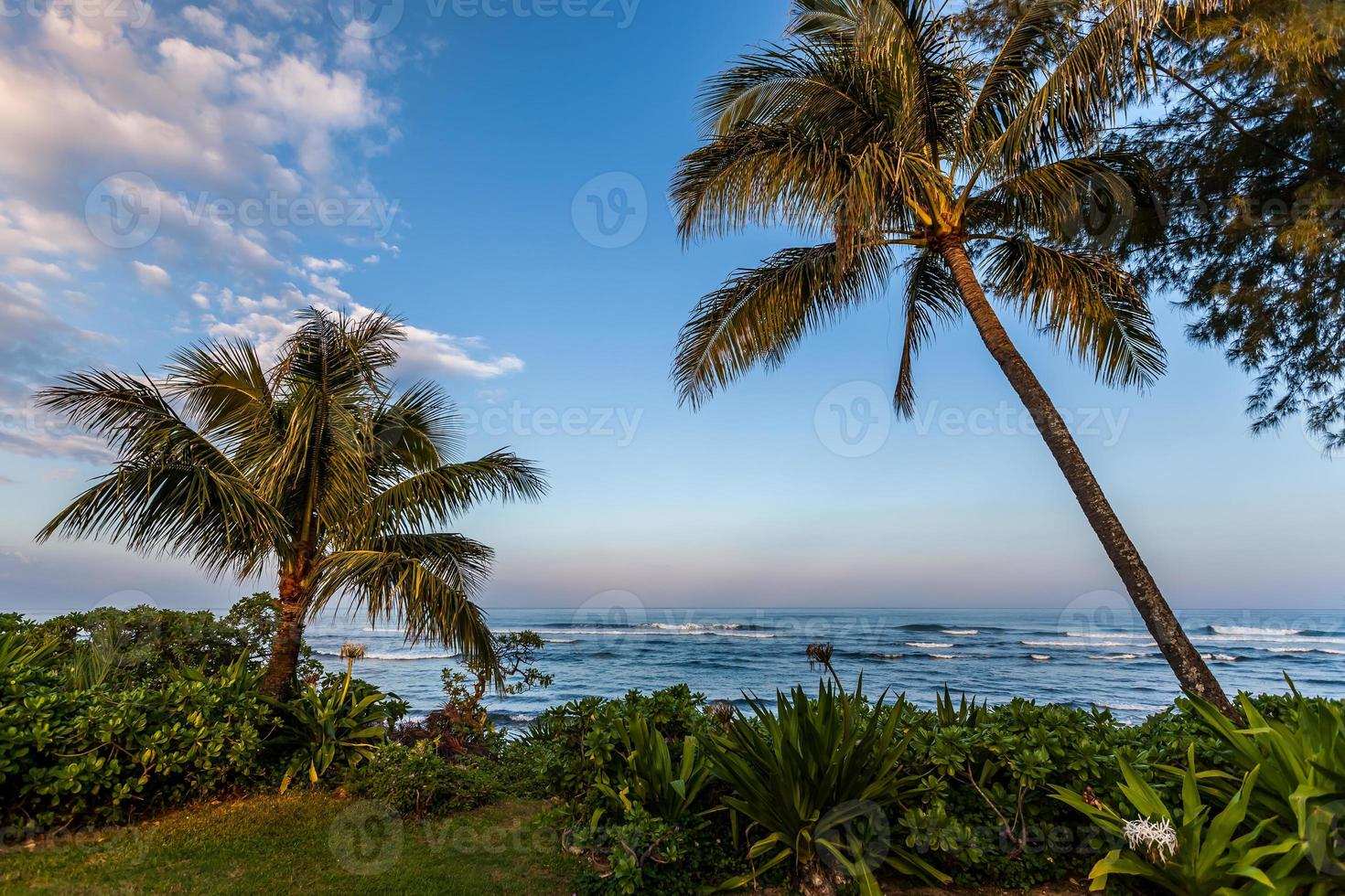 palmbomen langs de kust foto