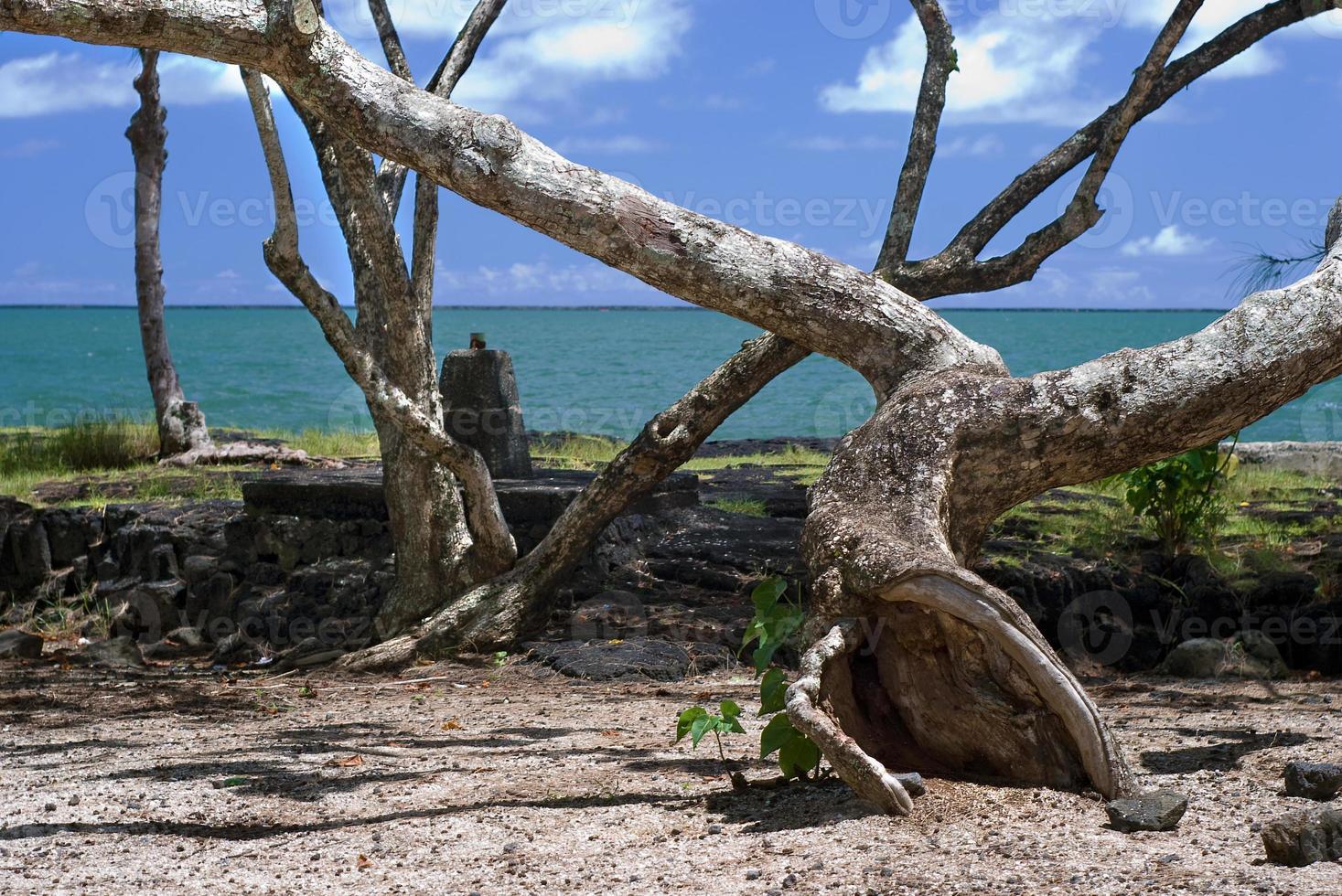 Coconut Island strand met tropische bomen en zand foto