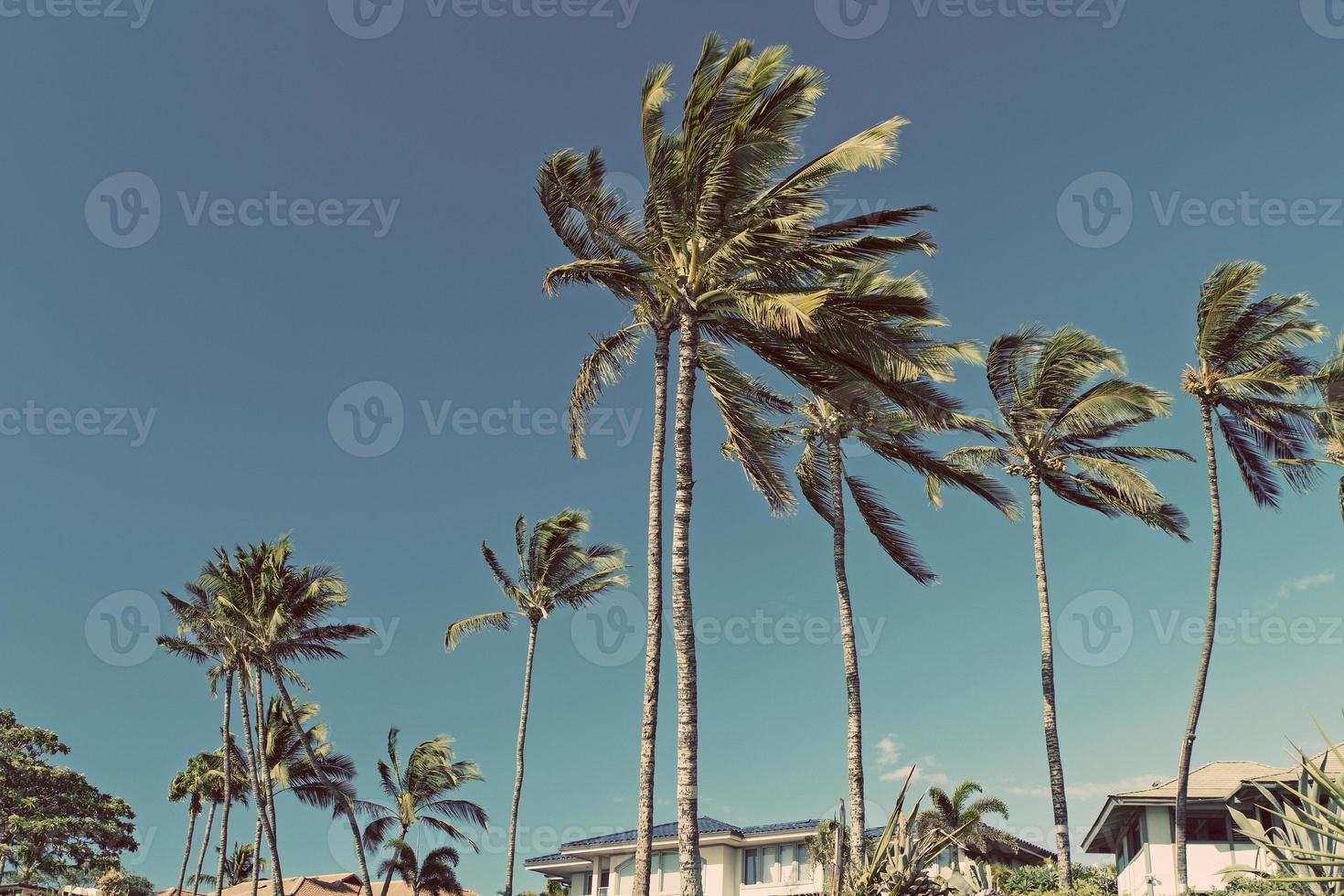 hawaï maui strandhuizen foto