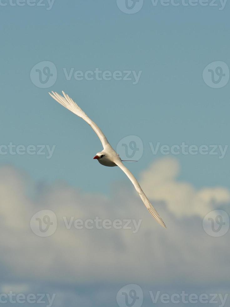 zeevogel foto