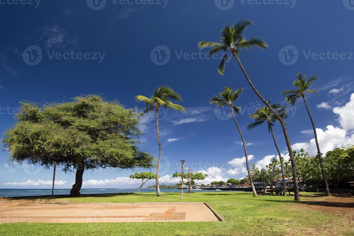 weergave van lahaina harbour park, maui, hawaii foto