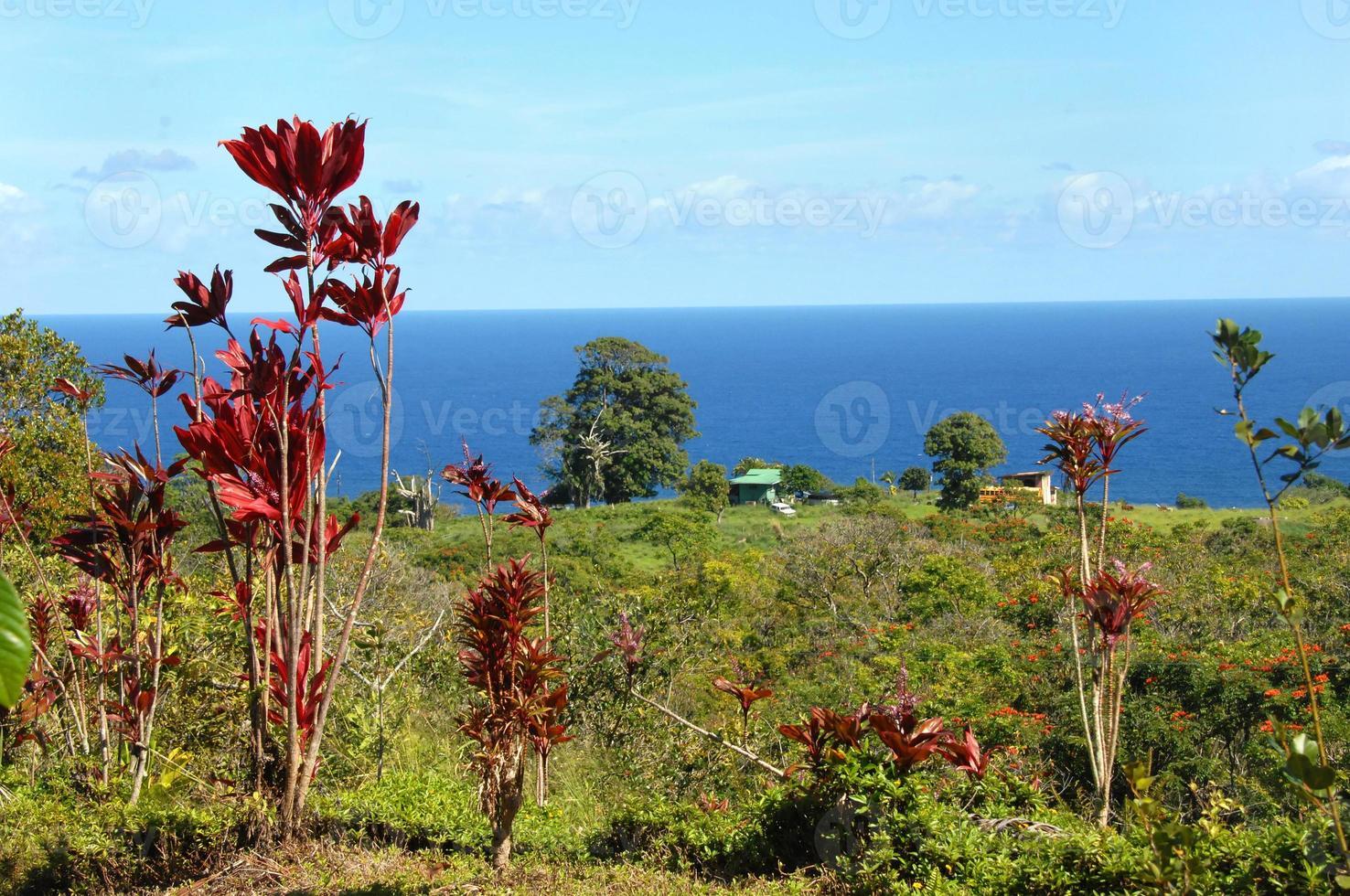 eenvoudig Hawaiiaans leven foto