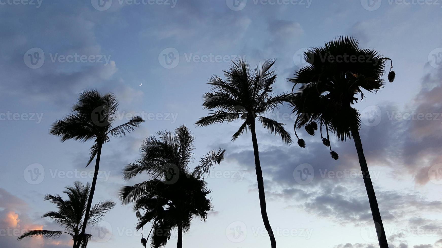 palmbomen in silhouet foto