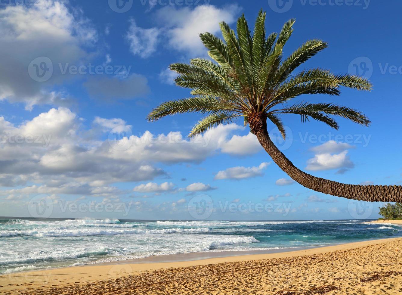 hellende palmboom op het strand foto