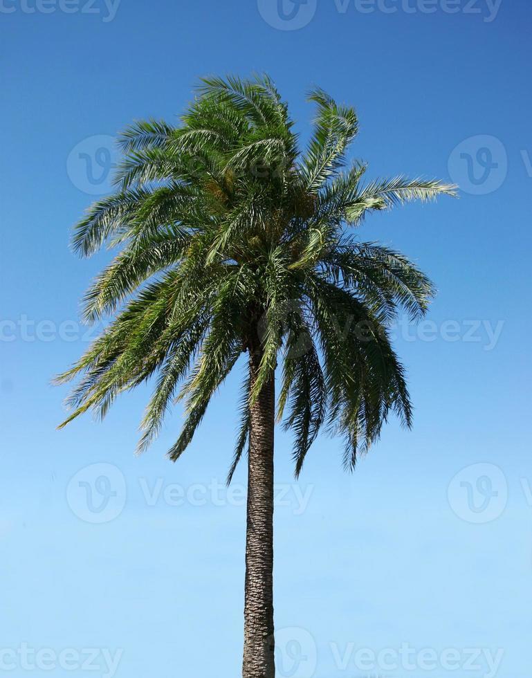 palmboom op een heldere dag foto