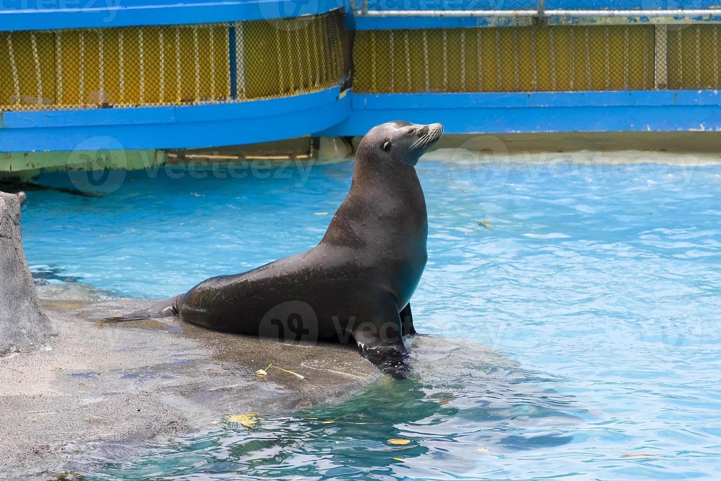zeeleeuwen koning foto