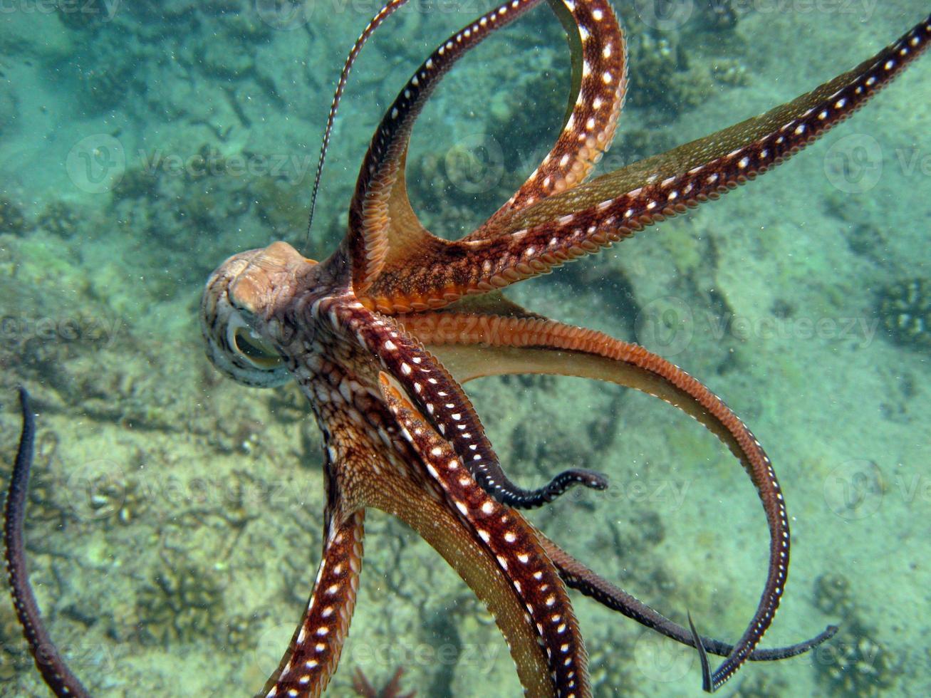 octopus ontsnappen foto