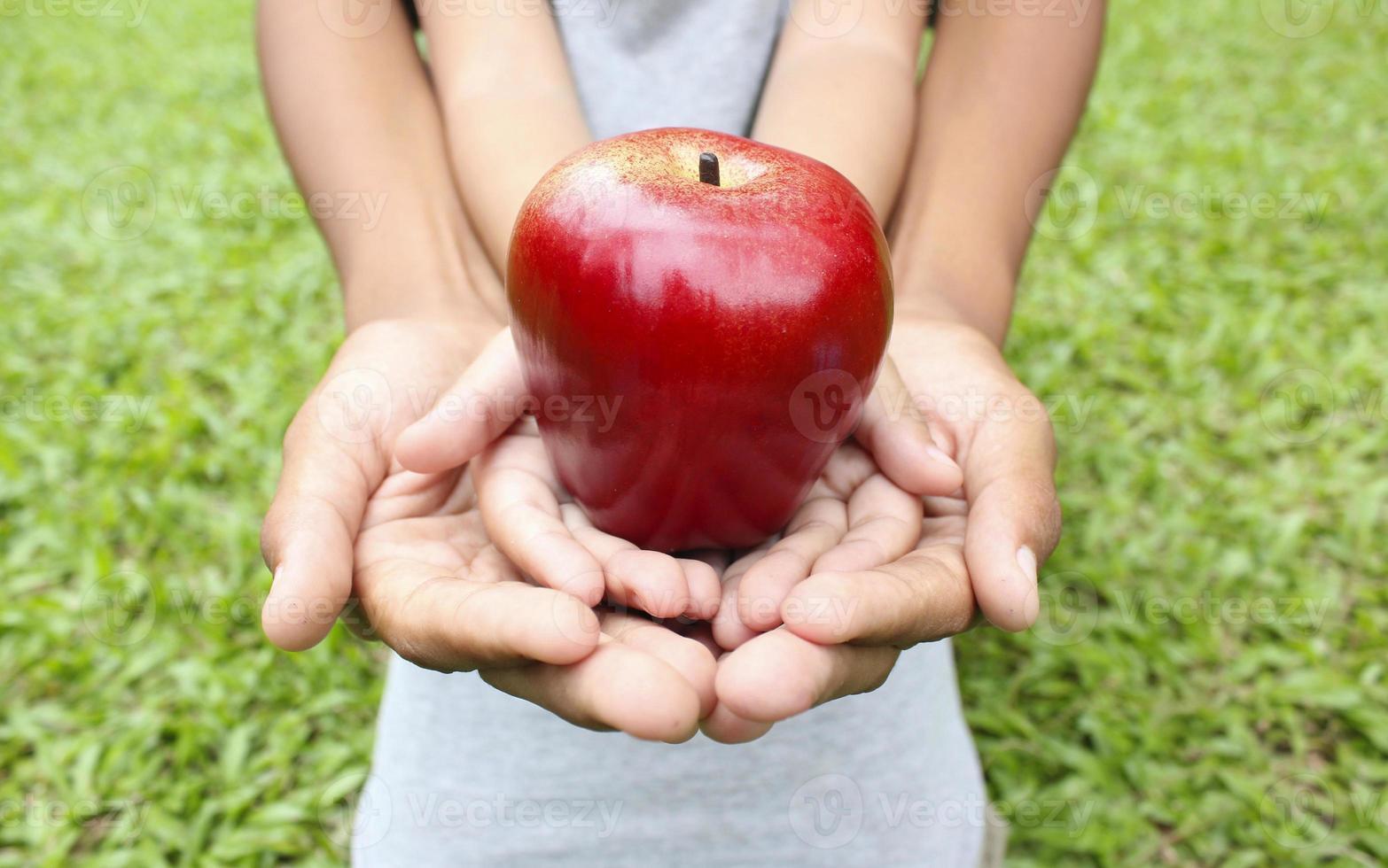volwassen handen die jong geitjehanden met rode appel houden foto