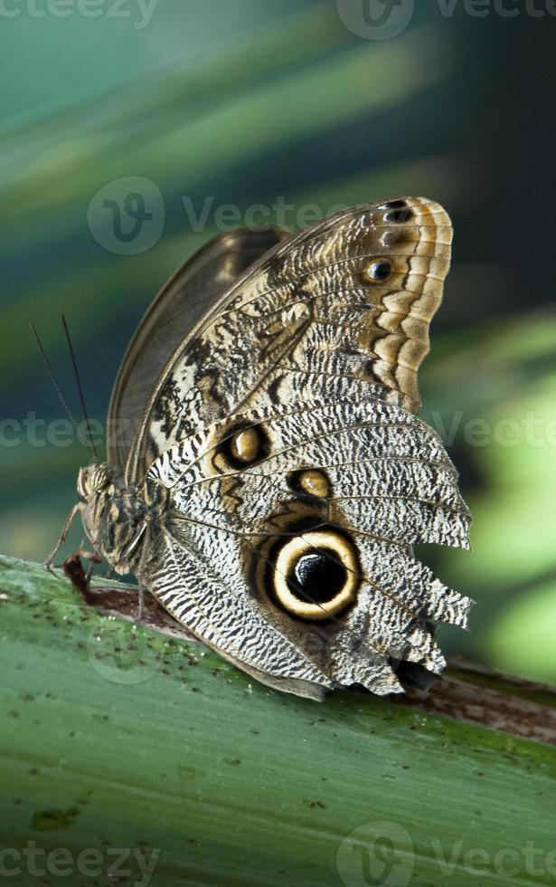 vlinder close-up foto