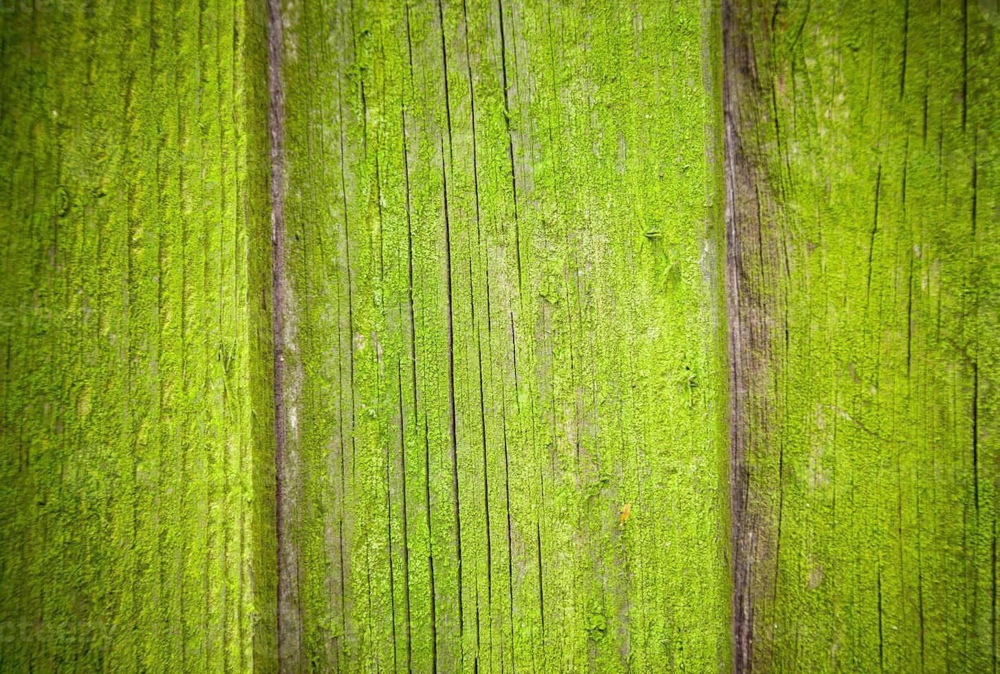 bemoste houten achtergrondstructuur foto