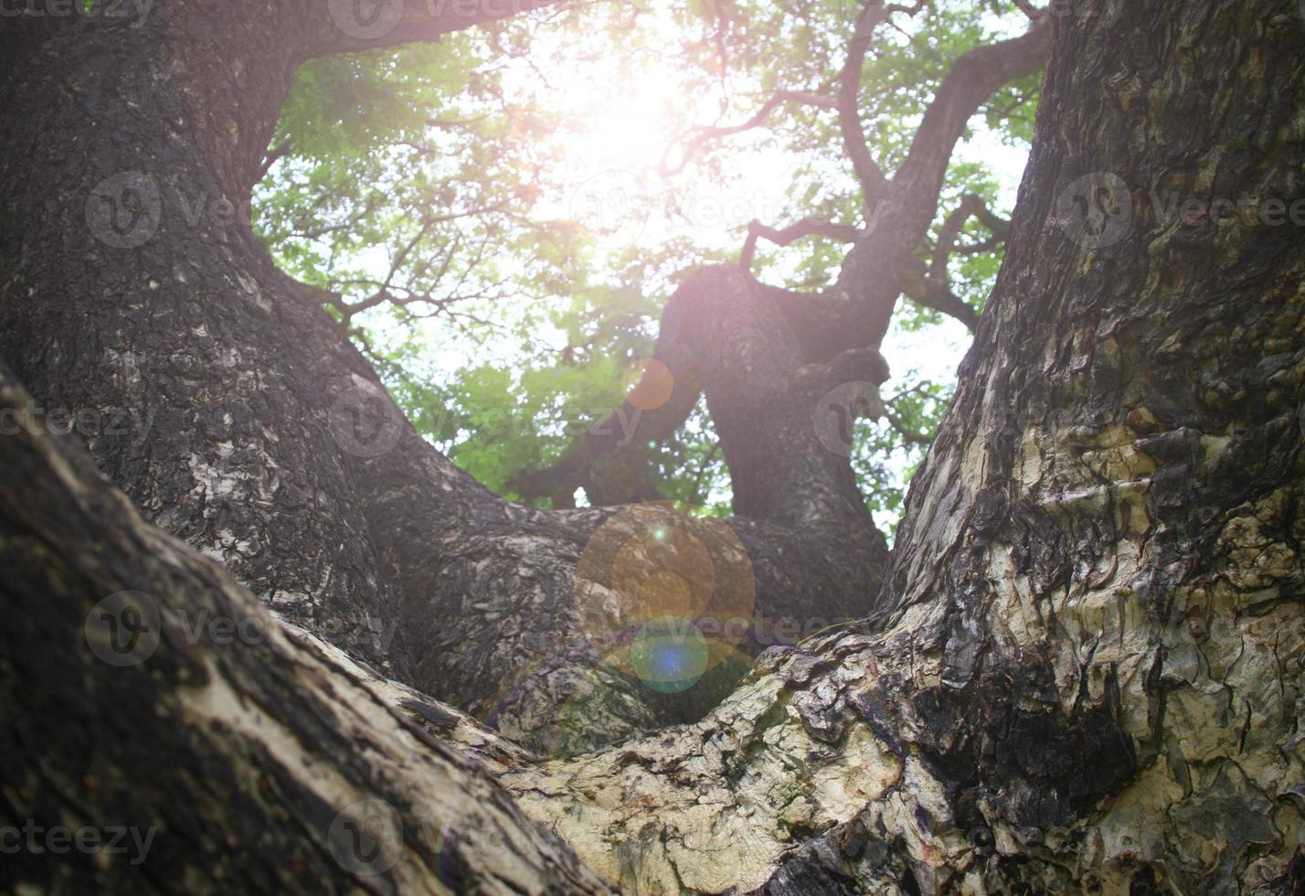 grote boom in het park foto