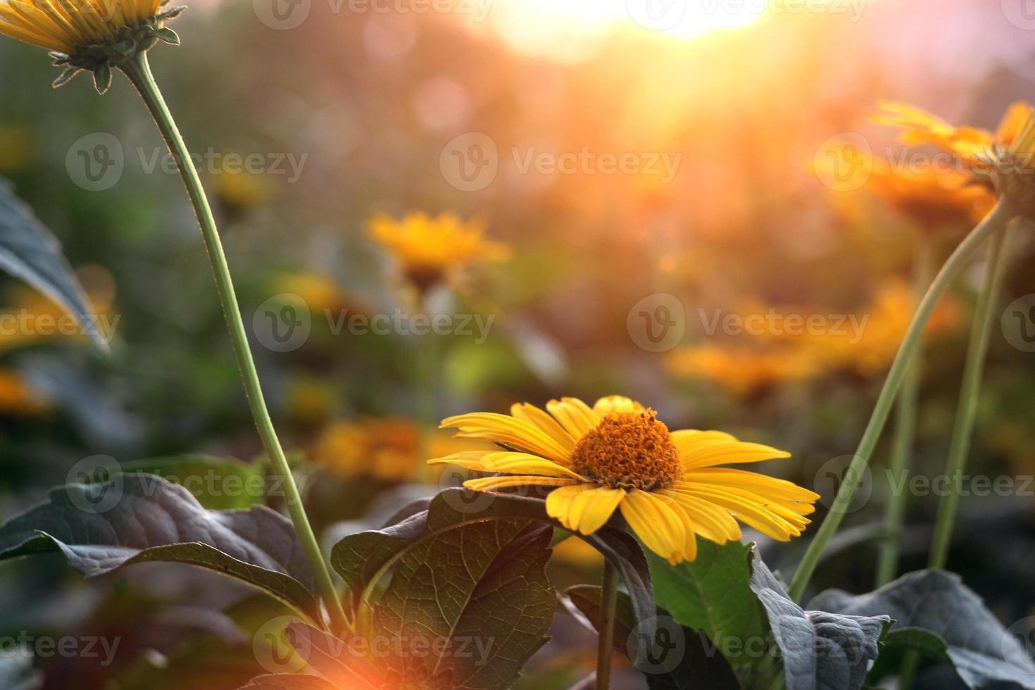 gele bloem in zonlicht foto