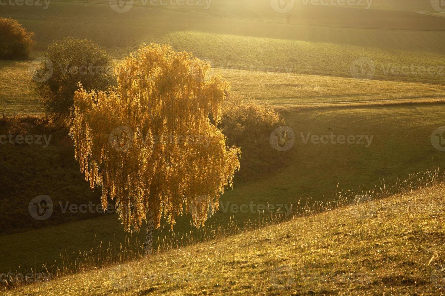 verlichte gele boom dicht foto