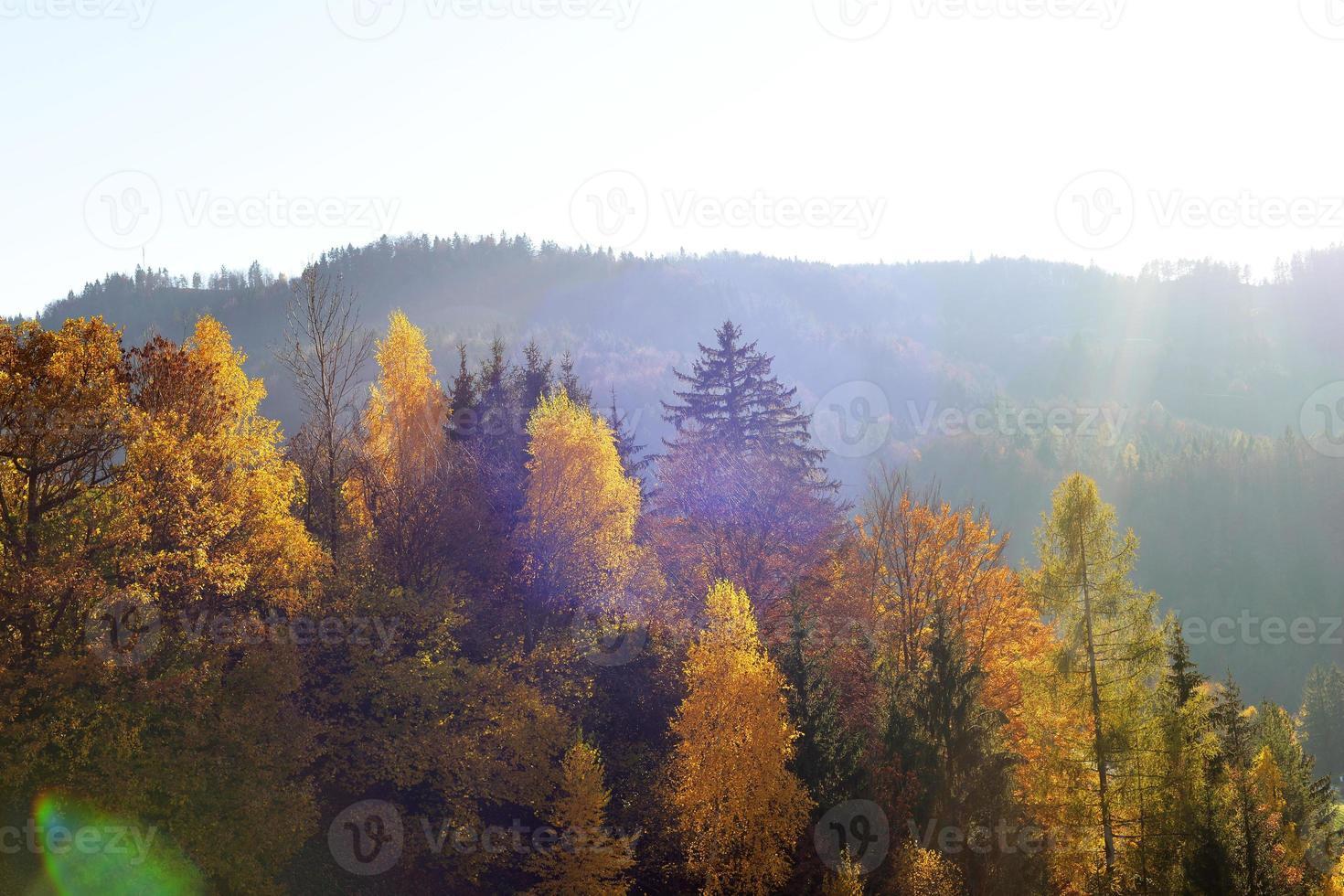 van groen tot goud foto
