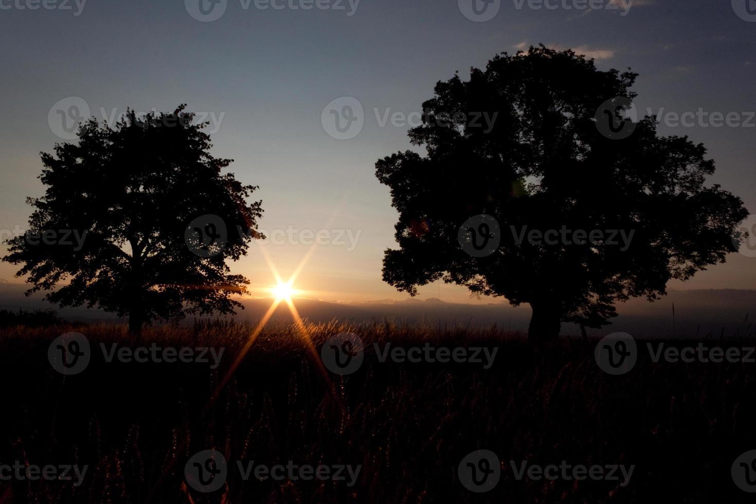 zonsondergang - eenzame boom en zon - voorraadbeeld foto