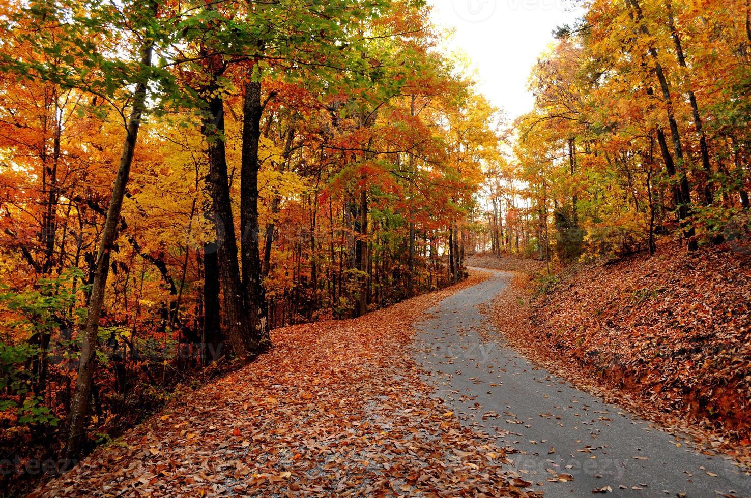 herfstkleuren met bladeren op een bergweg foto