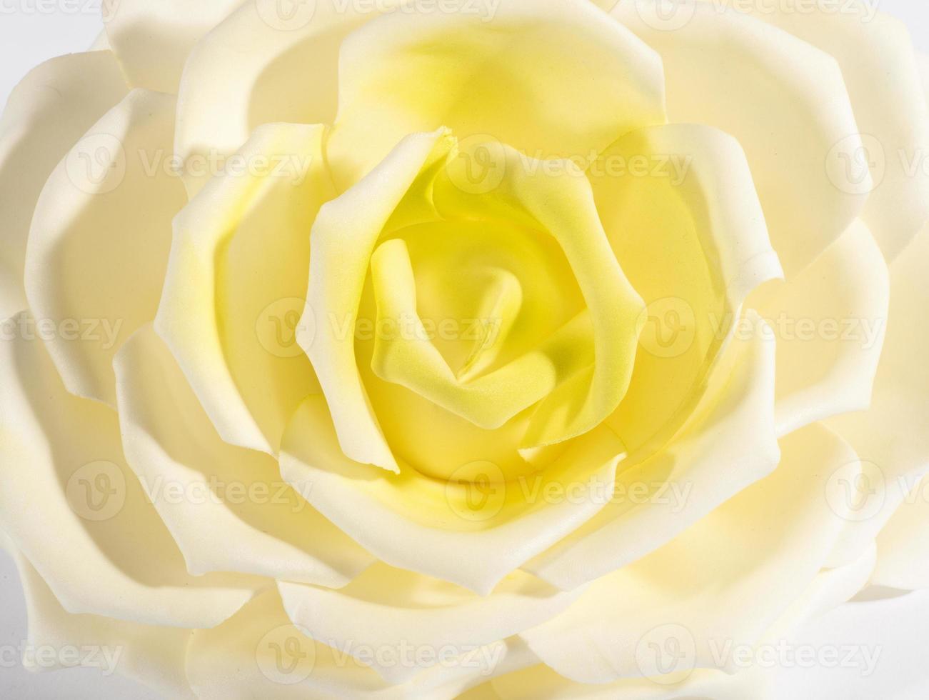 close-up detail van een witte en gele roos foto