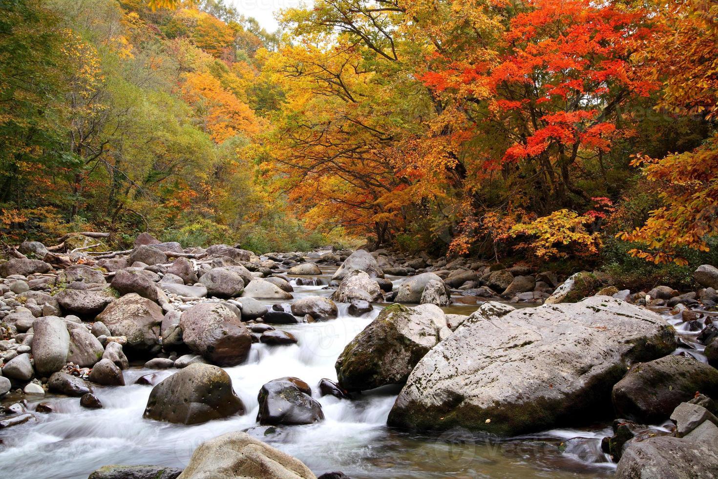 herfstkleuren van de vallei foto