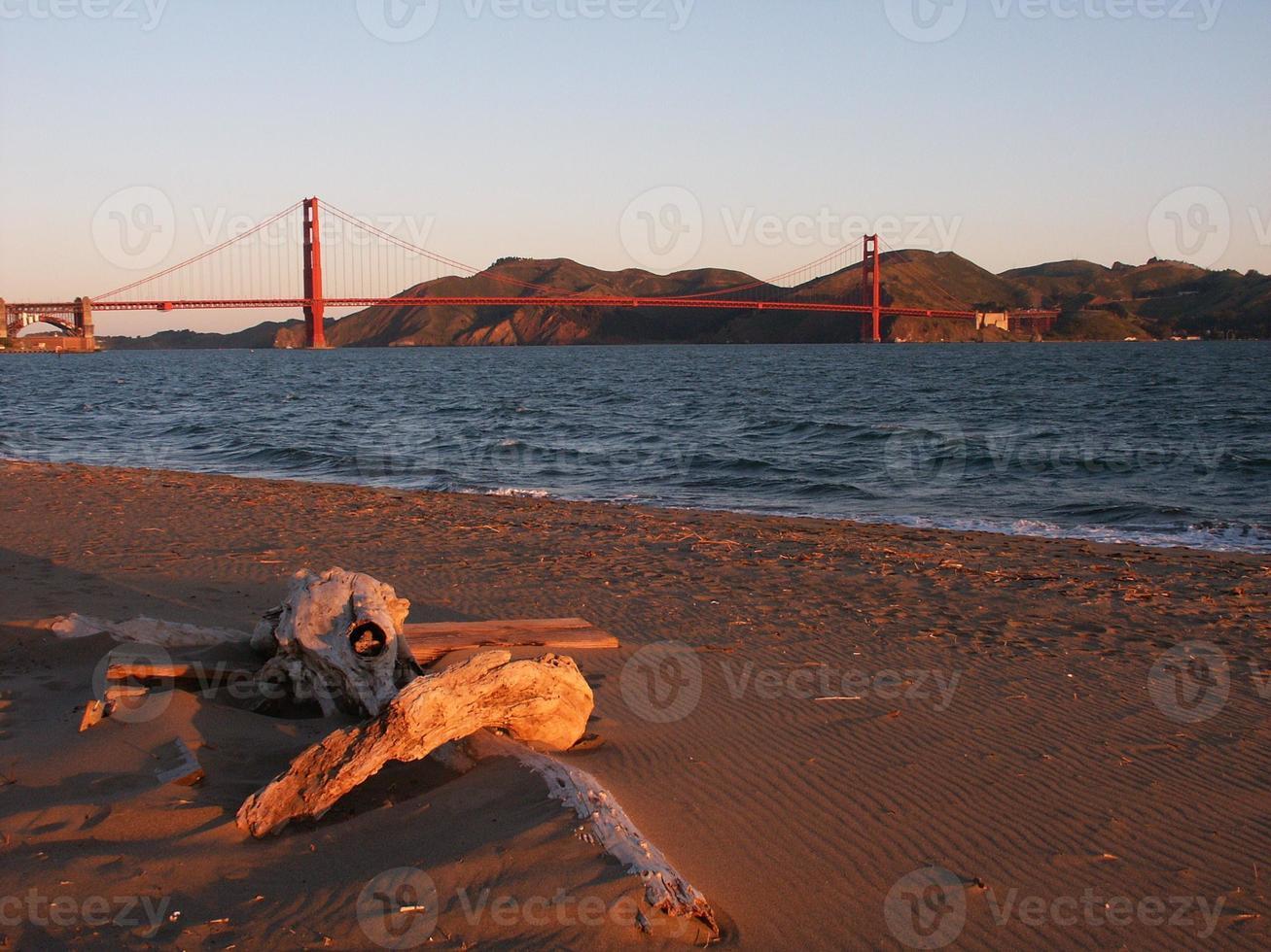 golden drift wood, san francisco, california, usa foto