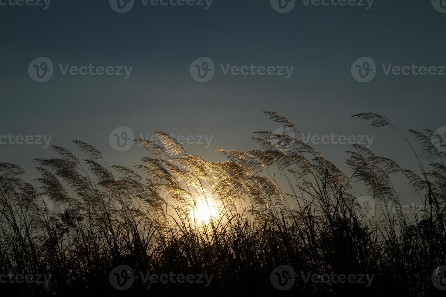 grasbloemen in een zonsondergangstemming met weinig licht foto