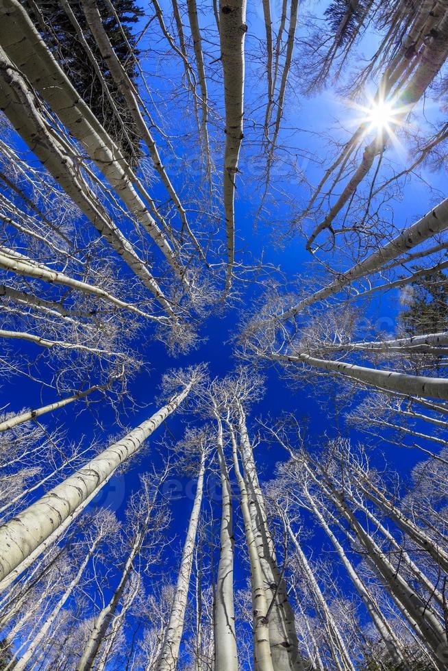 espen met blauwe hemel foto
