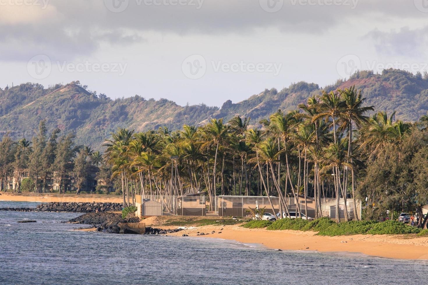 kokospalm boom op het zandstrand in kapaa hawaii foto