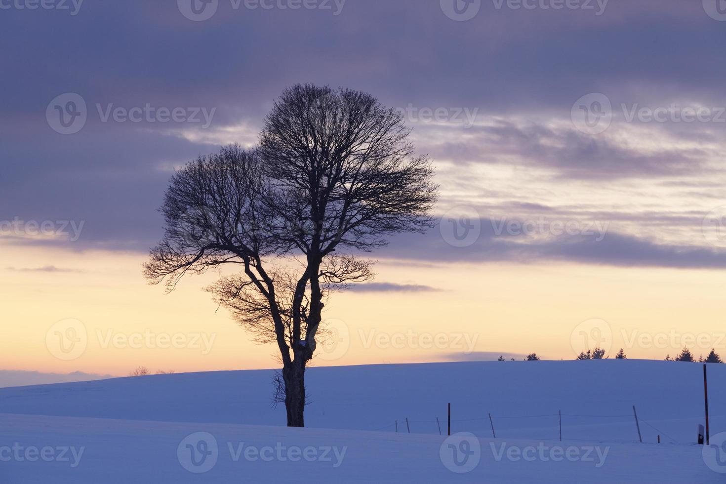 boom in een winterlandschap bij zonsondergang foto