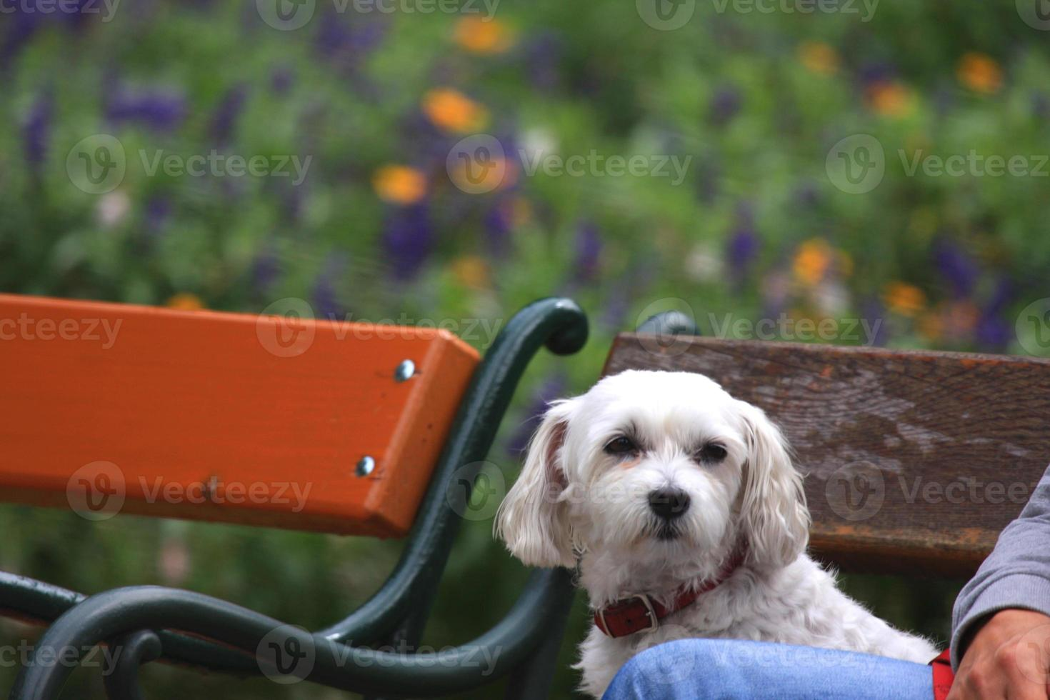 schattige hond geniet van het bankje foto