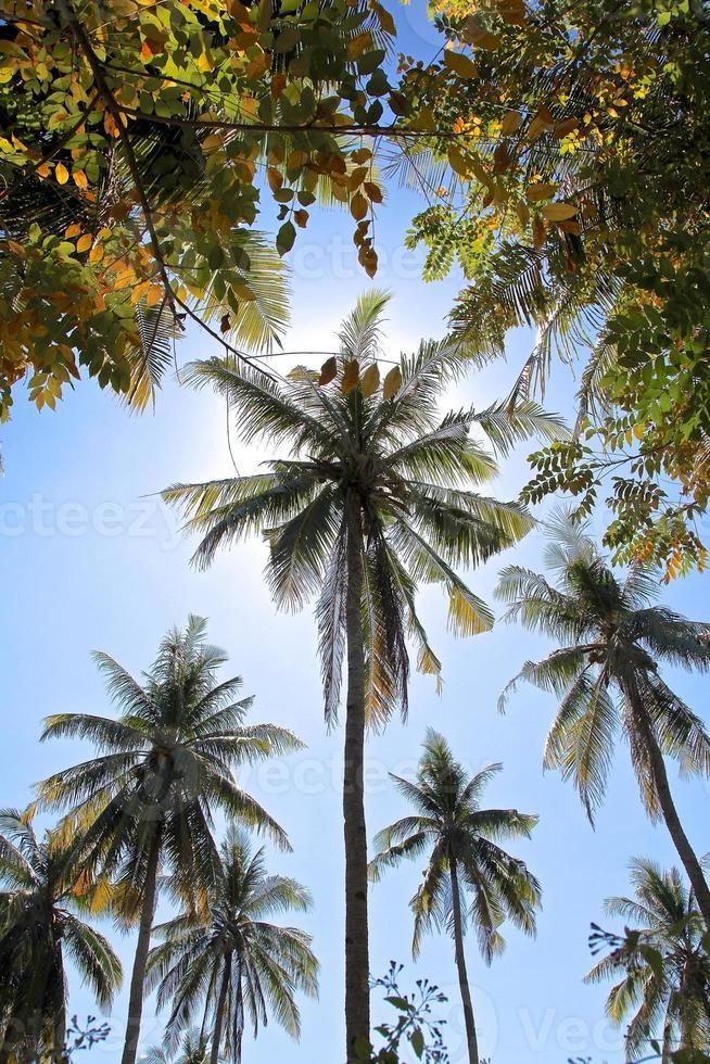 palmbomen tegen een achtergrond van zonlicht foto