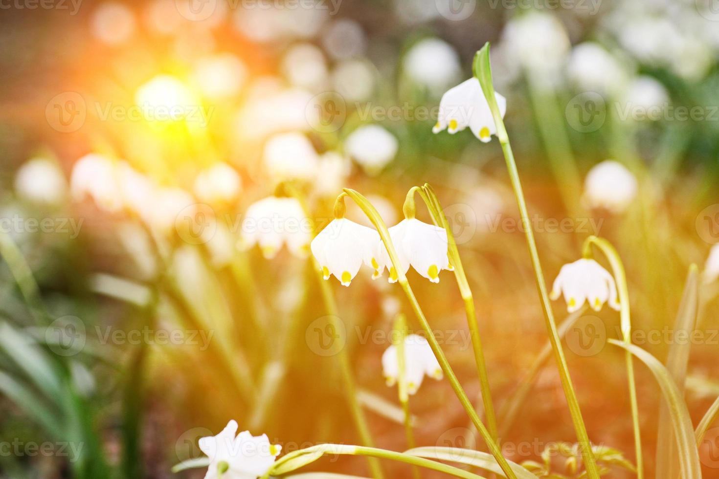 sneeuwvlok flare lente foto