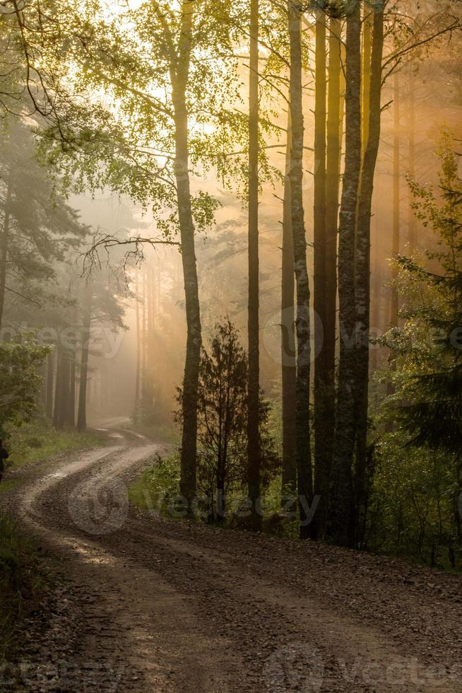 zonsopgang in het bos foto