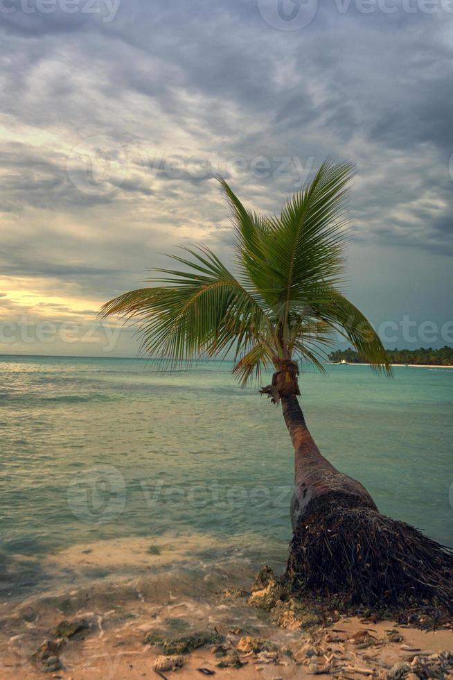 tropisch strand met een palmboom foto