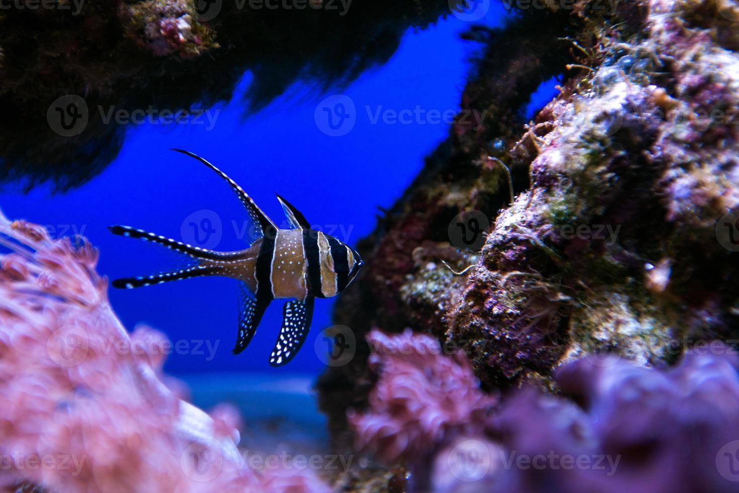 koraal en vissen foto