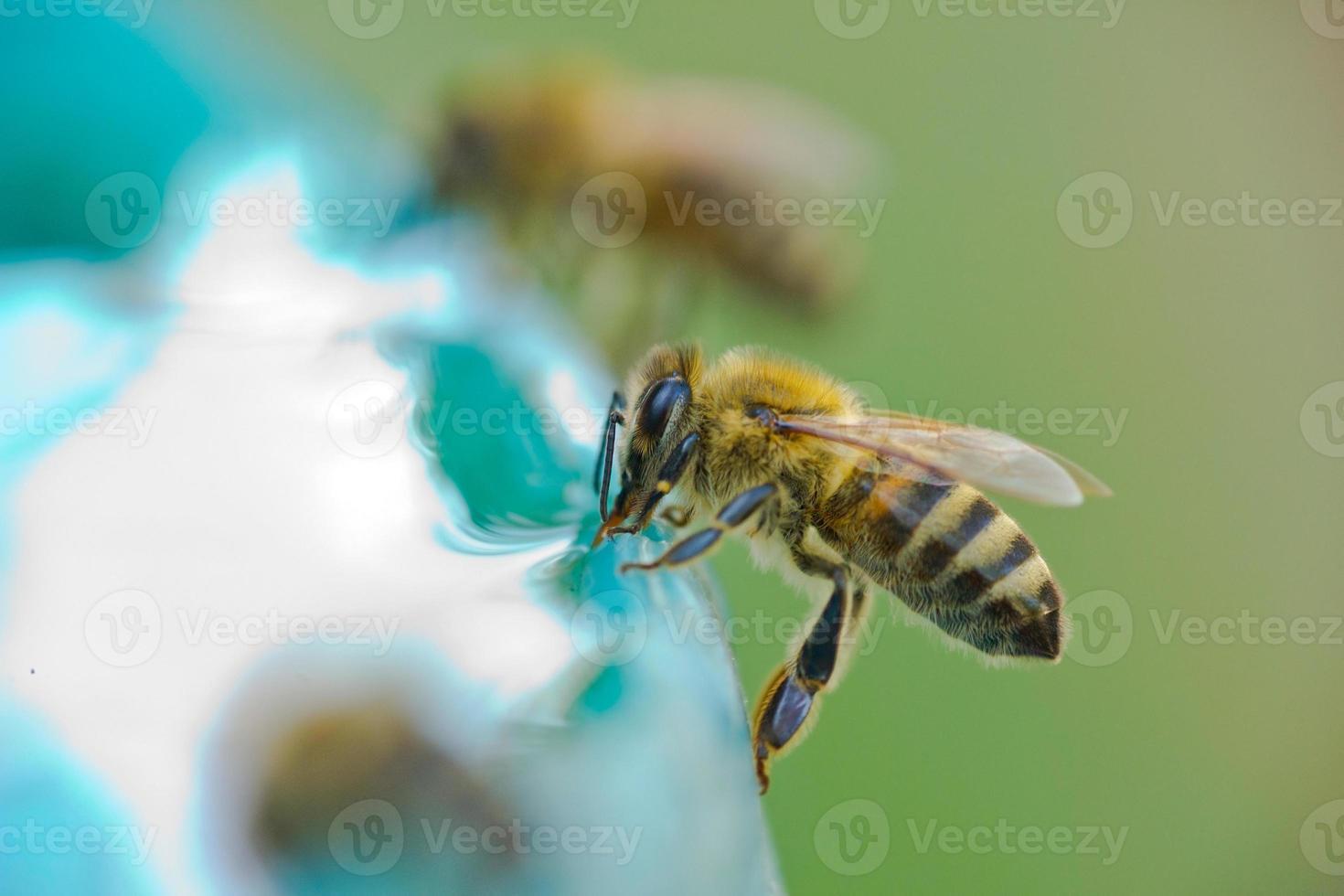 bijen drinkwater foto