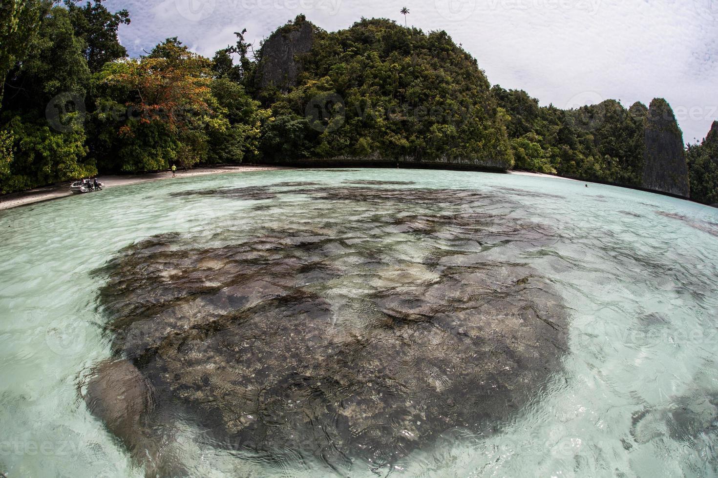 lagune koralen foto