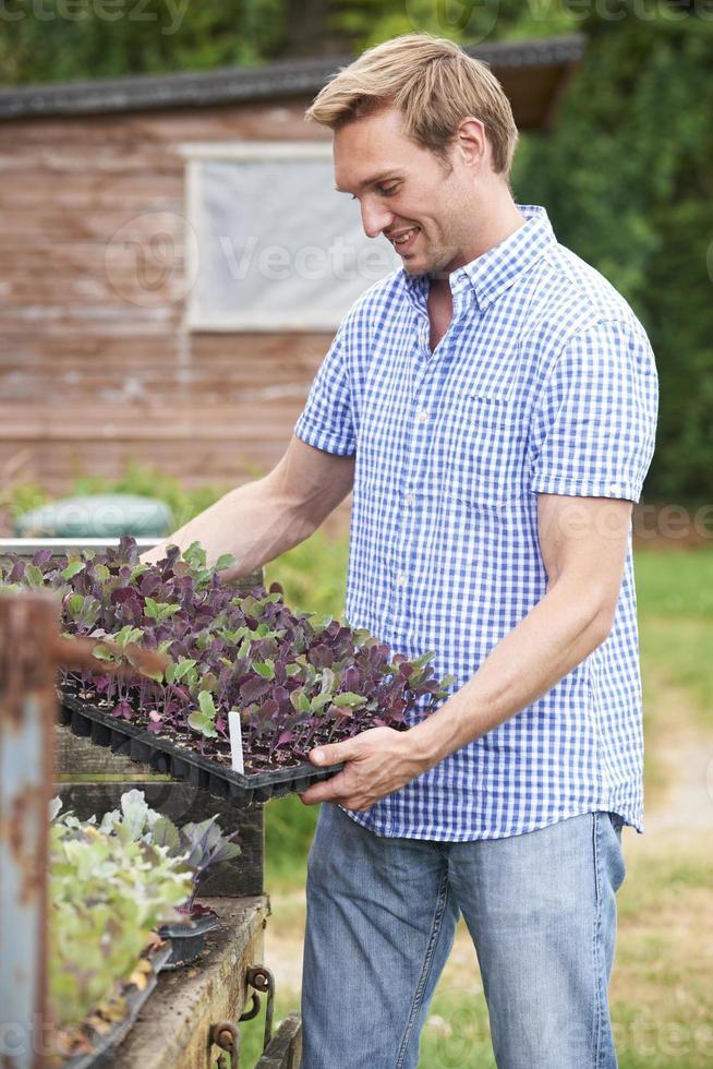 boer zaailingen planten op biologische boerderij foto
