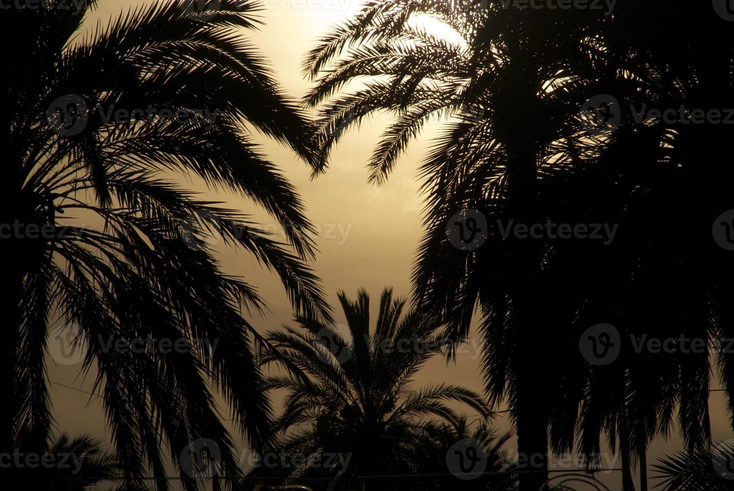 Spanje palmbomen silhouet foto