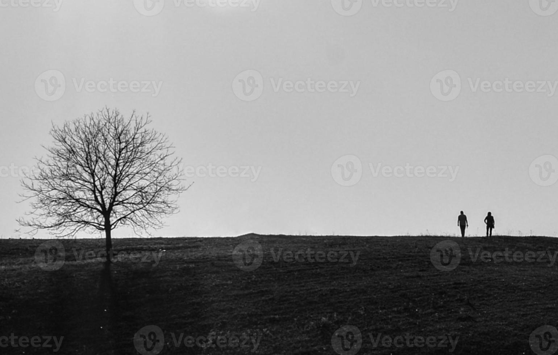 boom en een paar geliefden foto