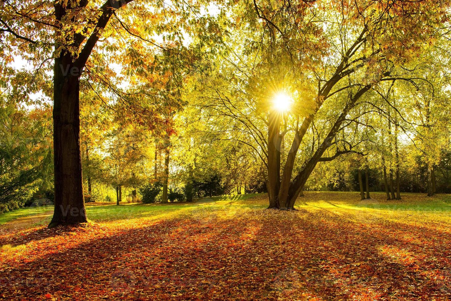 herfst - verlicht foto