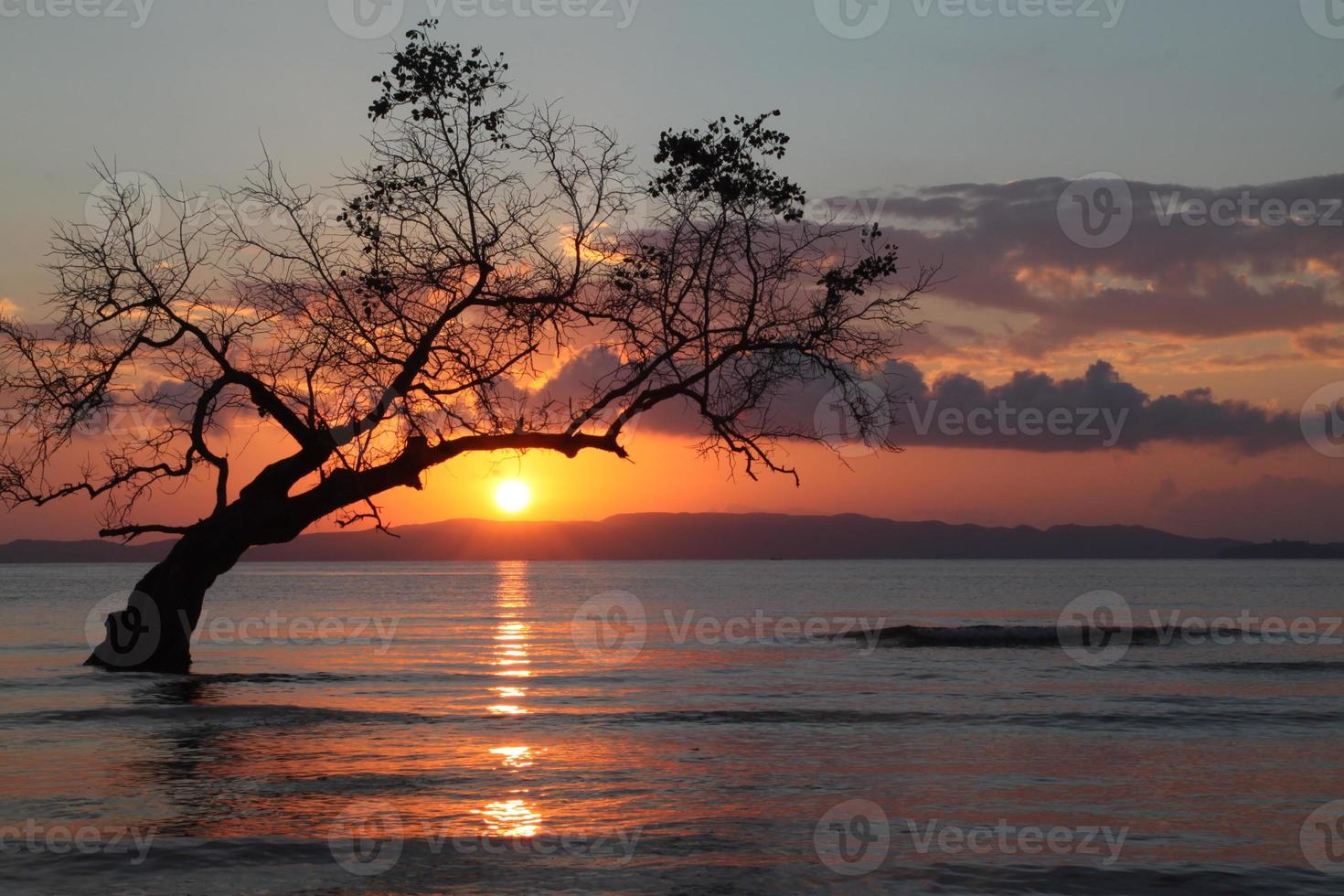eenzame boom met achtergrondverlichting foto