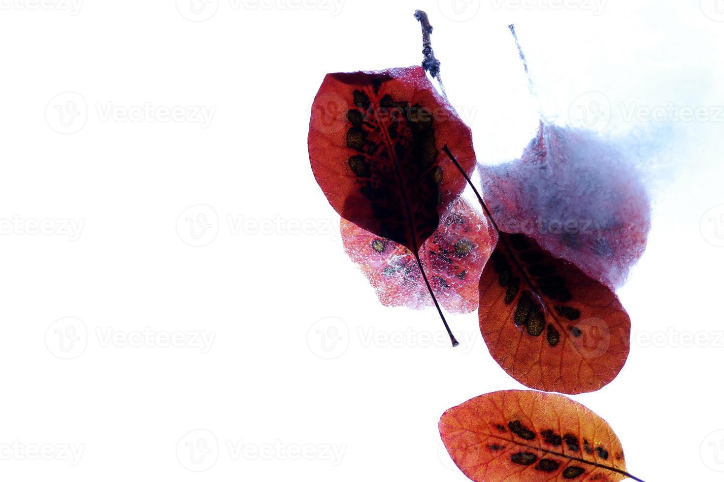 geïsoleerde herfstbladeren foto